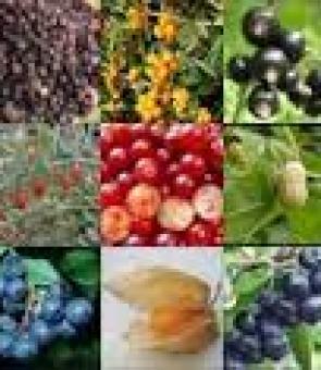 Les bienfaits dess baies séchées  ainsi que les graines de Chia biologique